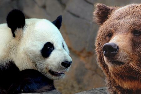 "Na podst. ""Giant Panda"" by Mike Johnston & ""What could he be thinking?"" by Valerie / Flickr, CC/"