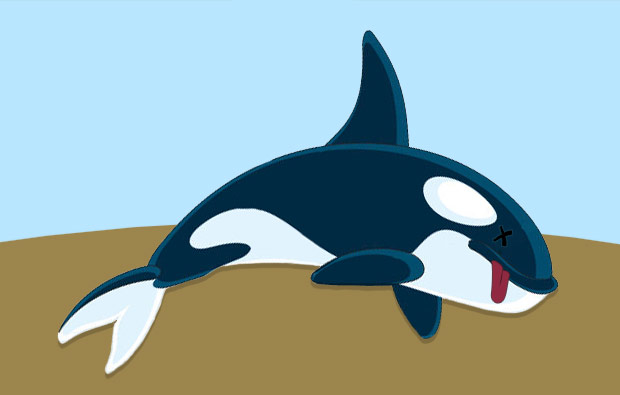 Orca pogrążyła Romney'a?